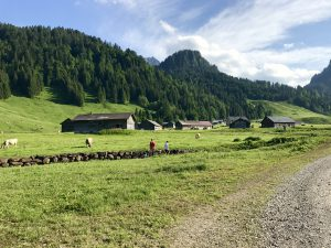 Schonenbach