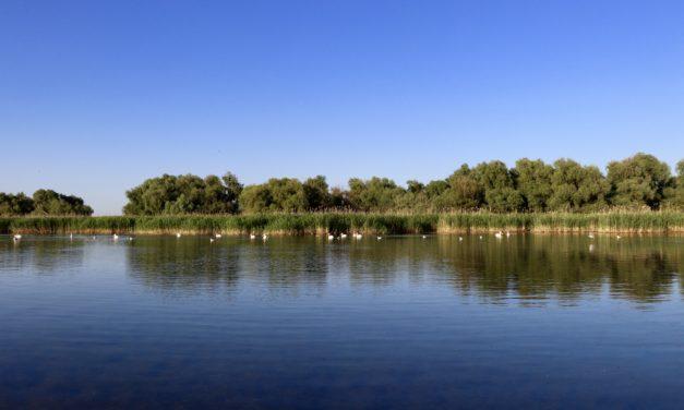 Sfaturi pentru a organiza o călătorie în Delta Dunării