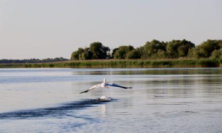 Delta Dunării – un spectacol desăvârșit al naturii