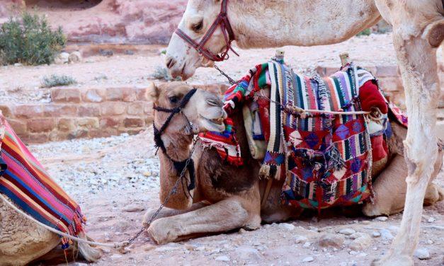 Turismul cu animale – o problemă care se poate rezolva prin informare