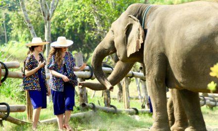 O vizită la un sanctuar de elefanți din Chiang Mai