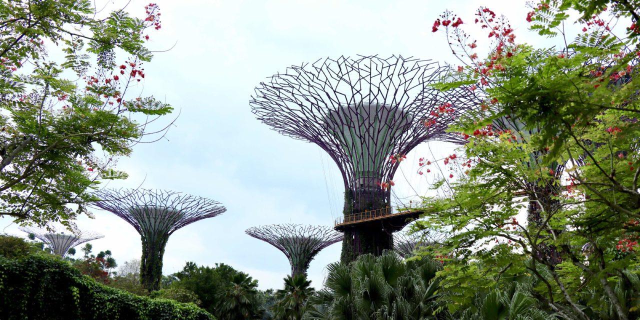 FOTO: Gardens by the Bay din Singapore – Natura exterioară (Partea 1)
