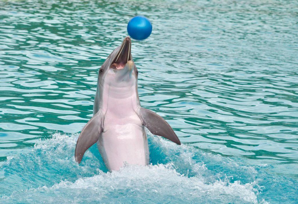 Delfin delfinariu