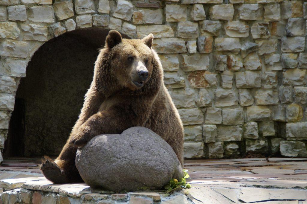 Urs zoo