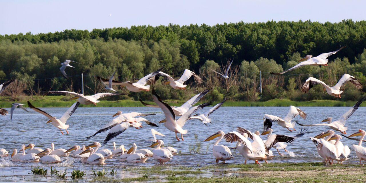 O zi cât o vacanță în Delta Dunării